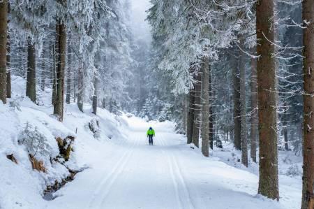 Zelený lesní okruh