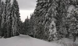 Lyžařské běžecké trasy Rejvíz
